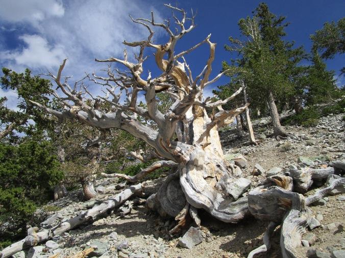 June 17 Great Basin (35)