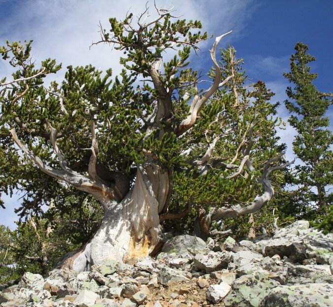 June 17 Great Basin (38)
